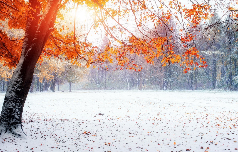 Photo wallpaper winter, snow, Park, yellow leaves