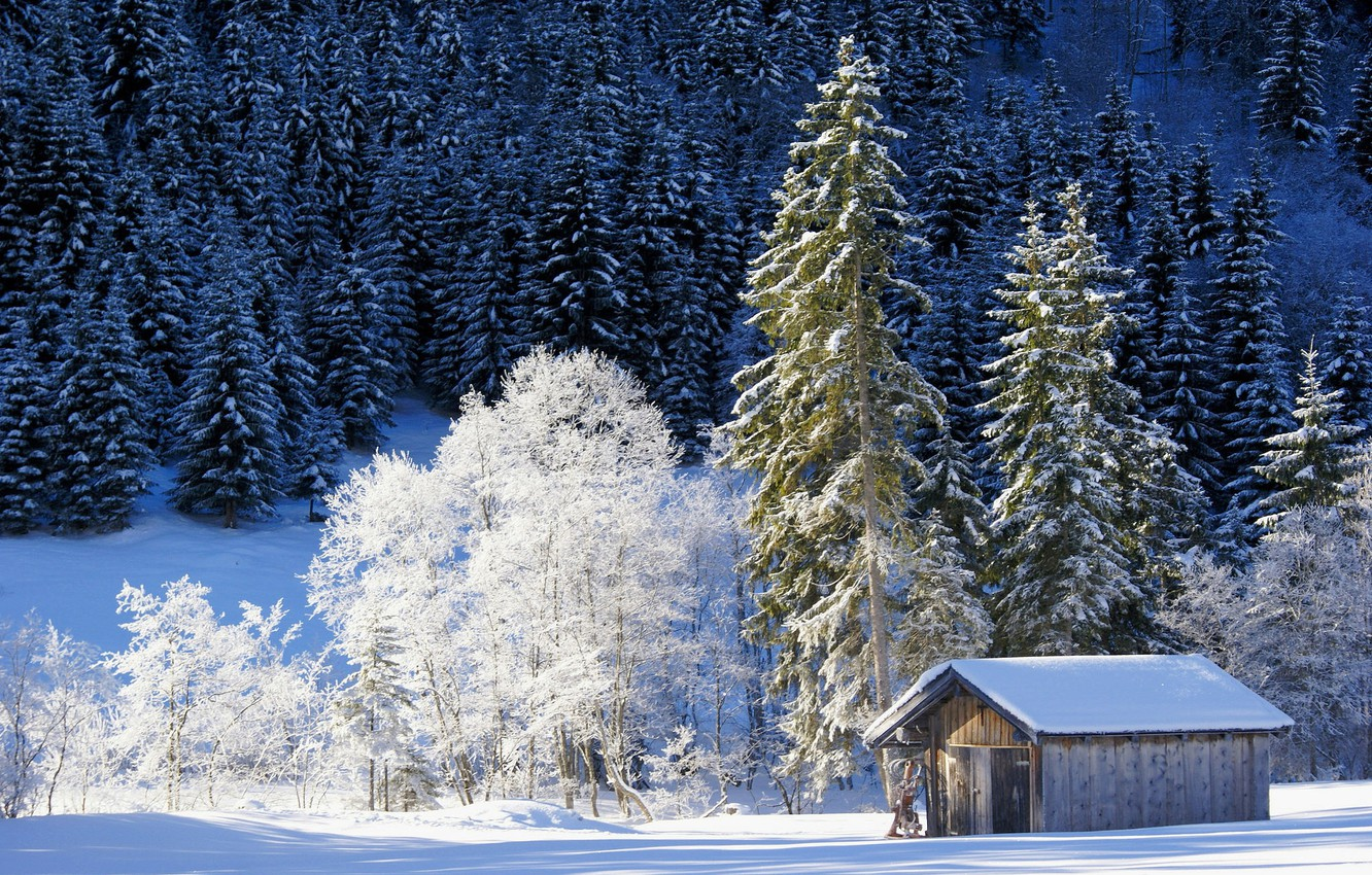 Photo wallpaper winter, forest, snow, trees, Germany, Bayern, the barn, Germany, Bavaria