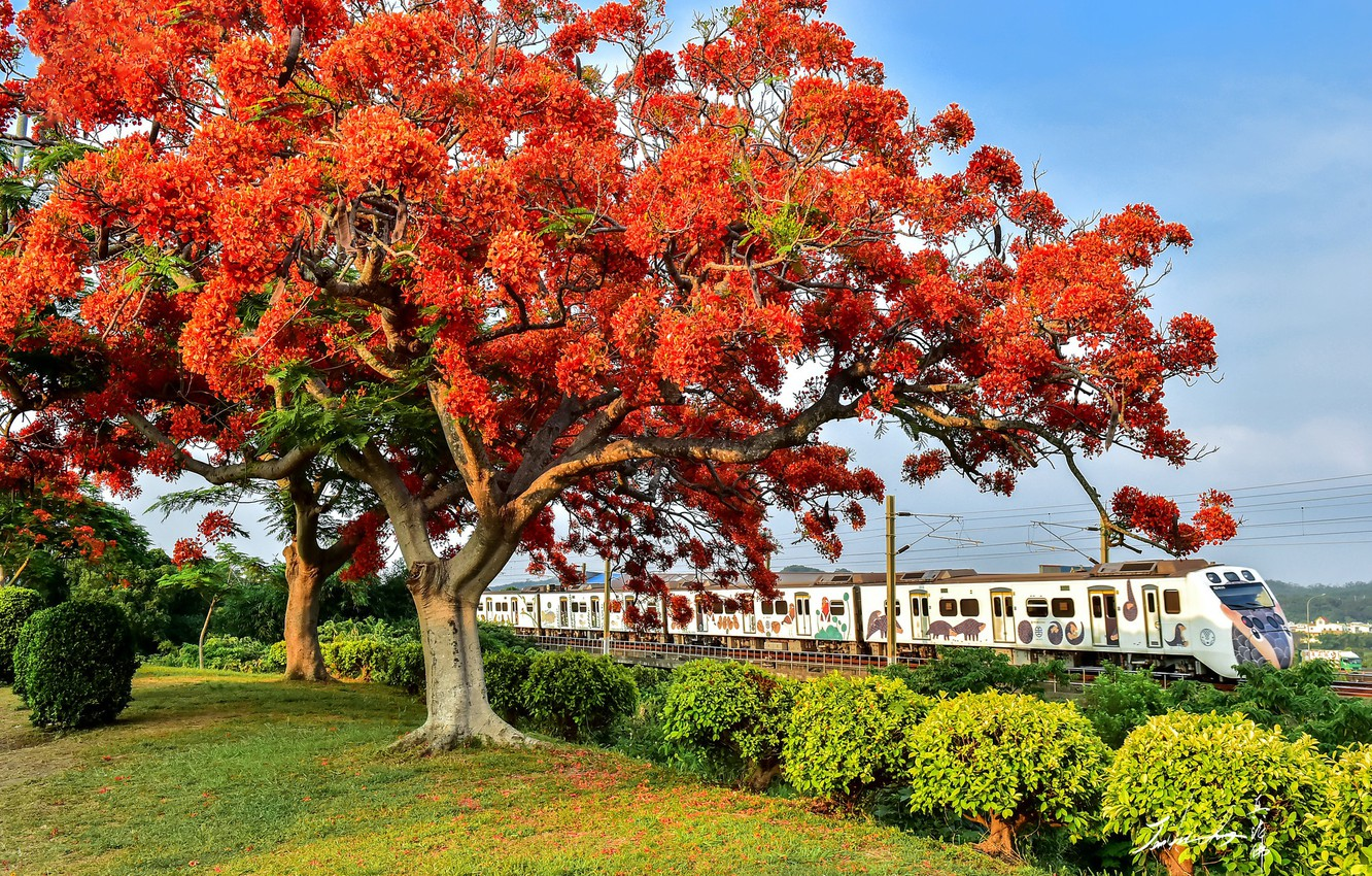 Photo wallpaper trees, train, flowering