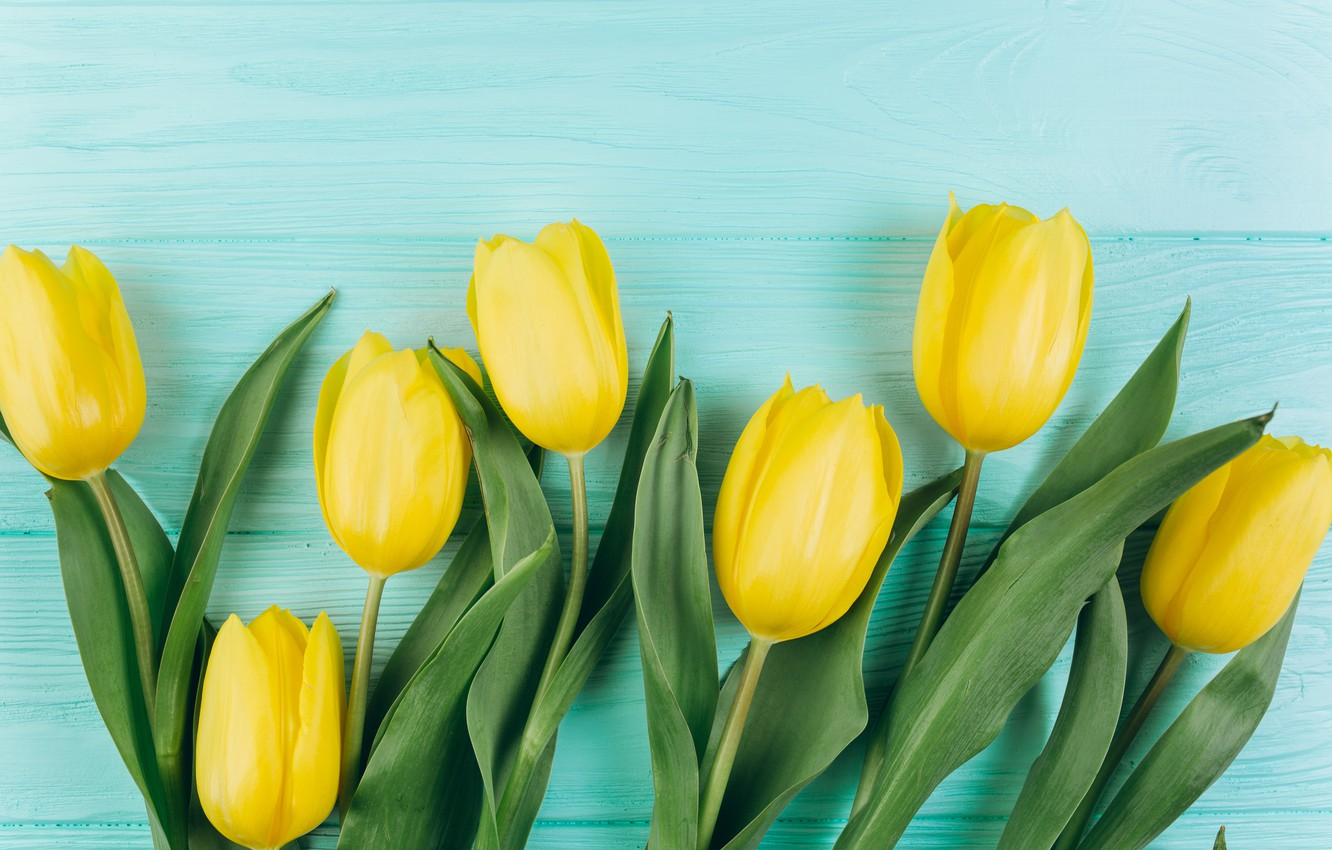 Photo wallpaper flowers, bouquet, yellow, tulips, fresh, yellow, wood, flowers, beautiful, tulips, spring, tender