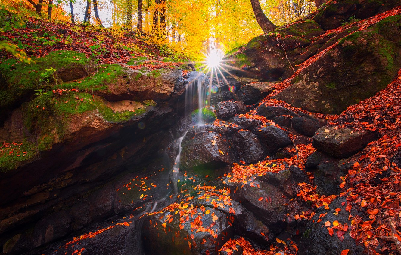 Photo wallpaper autumn, forest, leaves, the sun, rays, trees, nature, stream, stones