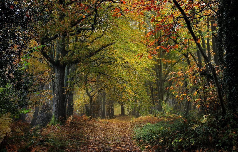 Photo wallpaper road, trees, nature
