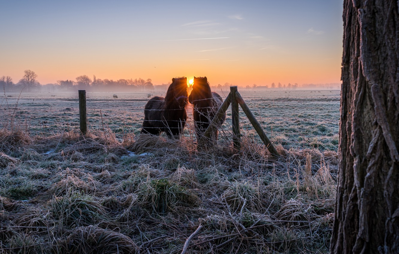 Photo wallpaper winter, frost, field, grass, the sun, rays, landscape, nature, fog, tree, dawn, horses, morning, village, ...