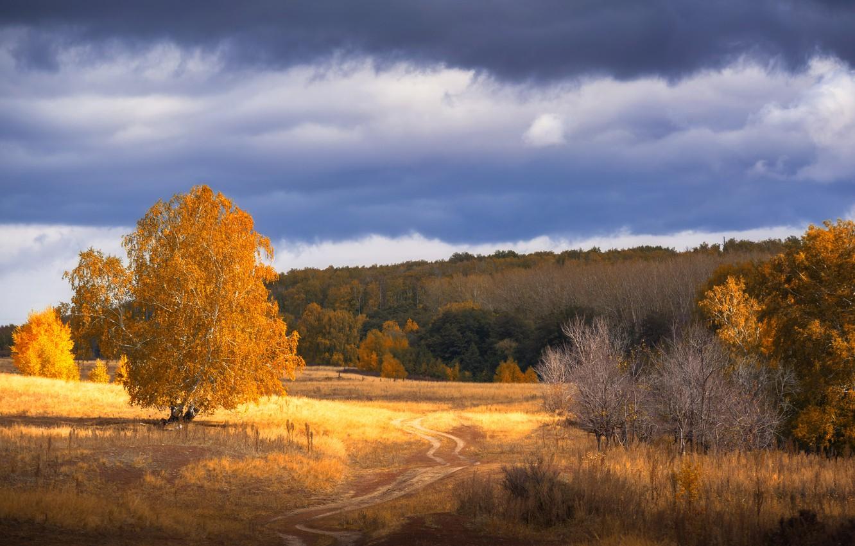 Photo wallpaper road, autumn, forest, tree, trail, red foliage, Orenburzhye