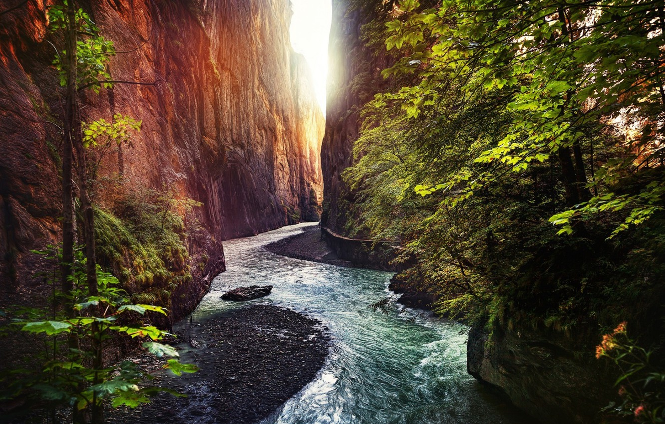 Photo wallpaper rock, forest, trees, landscape, nature, water, River, gorge