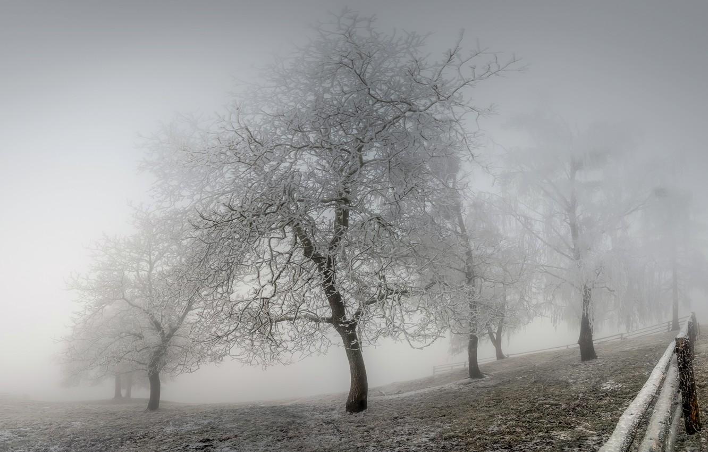 Photo wallpaper winter, frost, fog