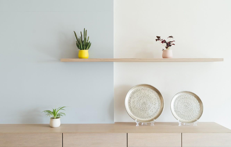 Photo wallpaper plants, plates, shelf, pots