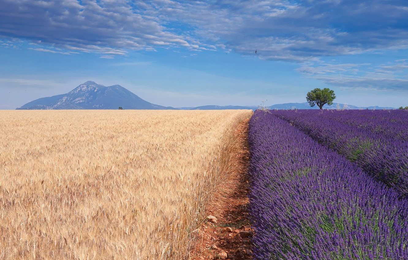 Photo wallpaper wheat, field, mountains, nature, lavender