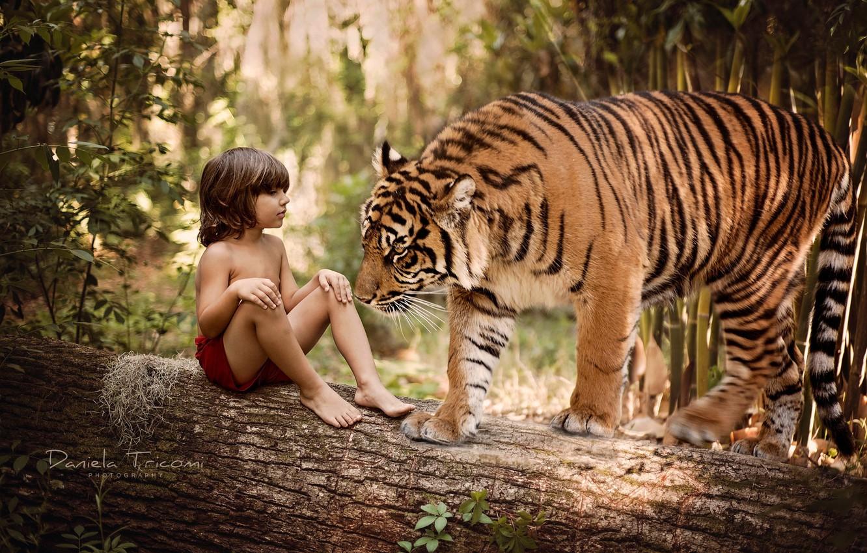 Photo wallpaper nature, tiger, tree, animal, predator, boy, trunk, log, Mowgli, child