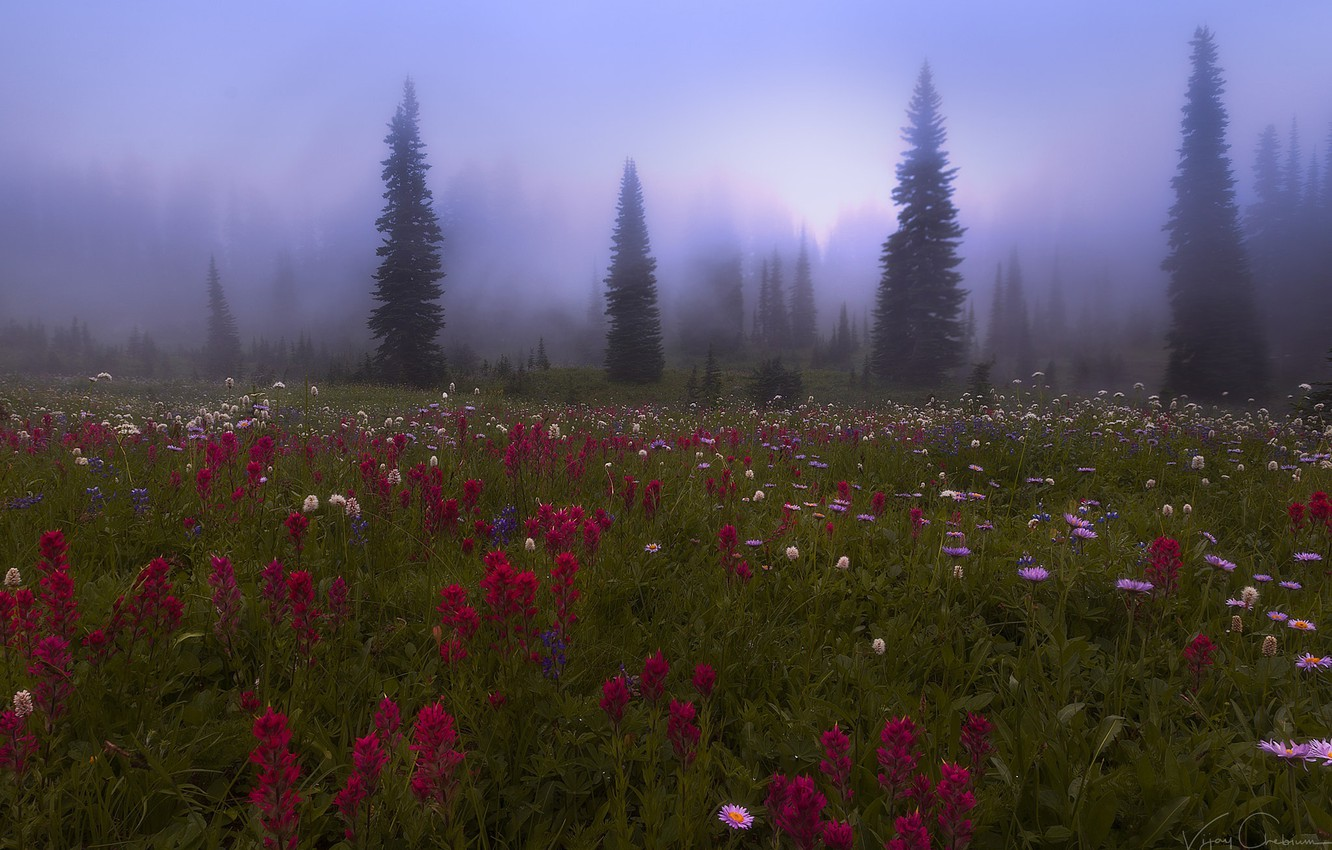 Photo wallpaper forest, flowers, nature, fog, meadow, haze