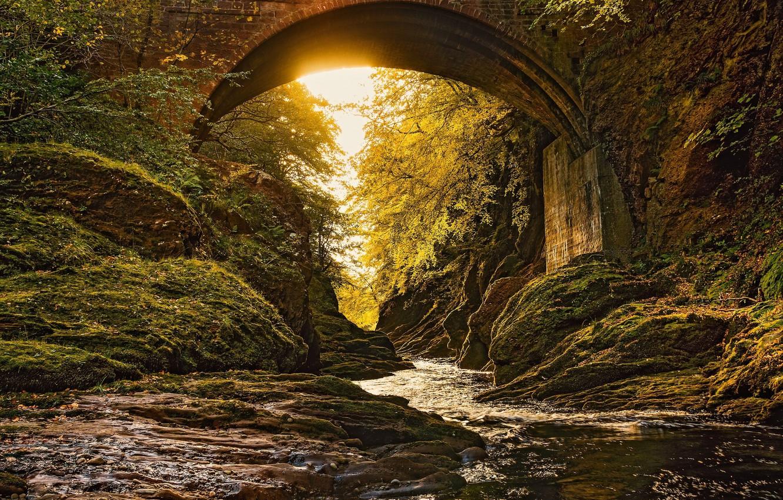 Photo wallpaper forest, bridge, arch