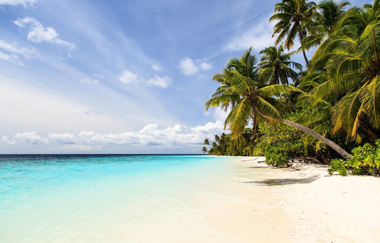 Photo wallpaper sea, beach, nature, tropics, palm trees, shore, blue sky
