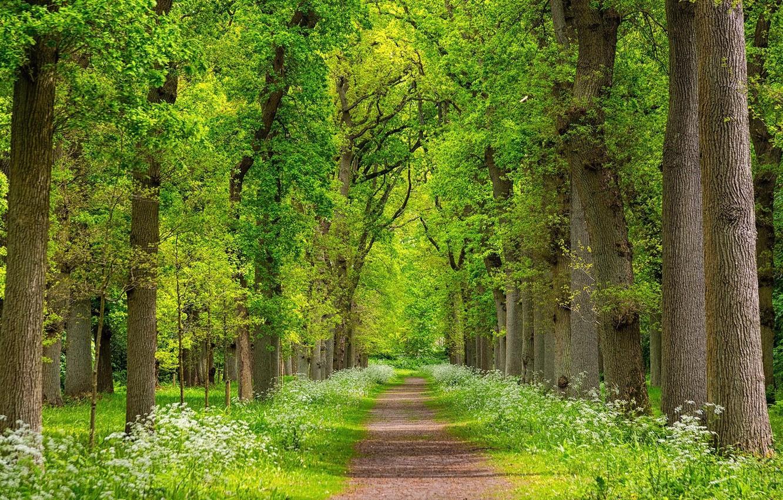 Photo wallpaper greens, trees, landscape, nature, beauty, spring, joraga