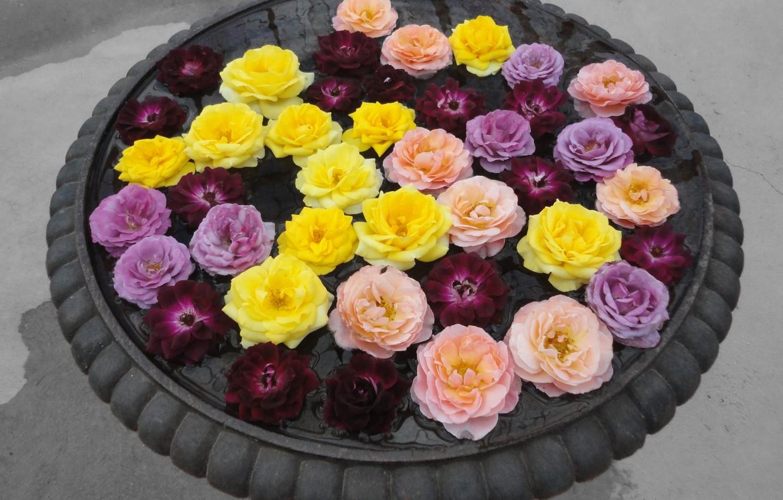 Photo wallpaper Roses, Roses, Colors