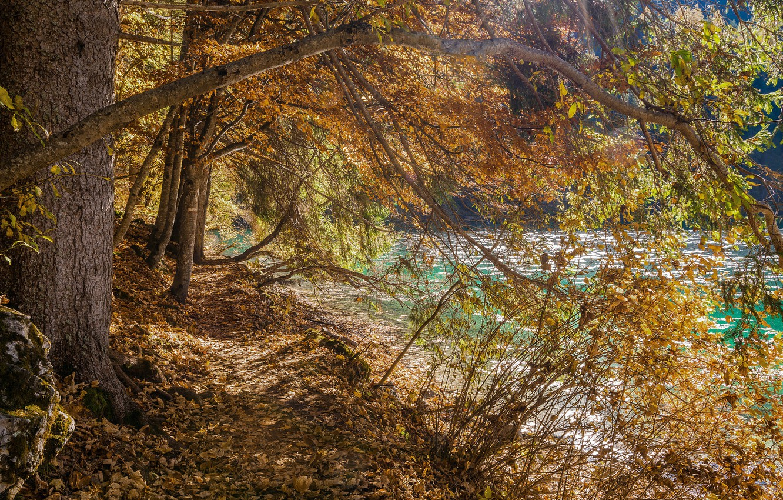 Photo wallpaper autumn, trees, lake, Italy, Trentino Alto Adige, Lago di Tovel, The Adamello Brenta Park