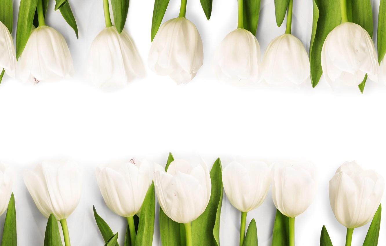 Photo wallpaper flowers, spring, tulips, white, white, fresh, flowers, tulips, spring