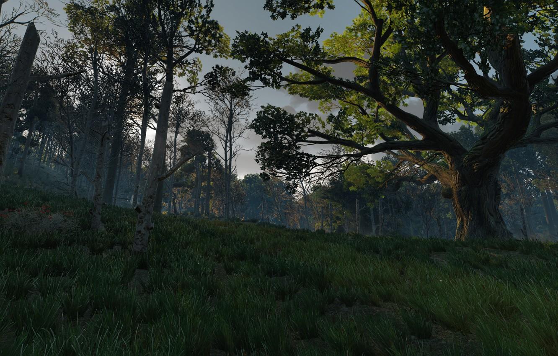Photo wallpaper grass, tree, the witcher 3 wild hunt