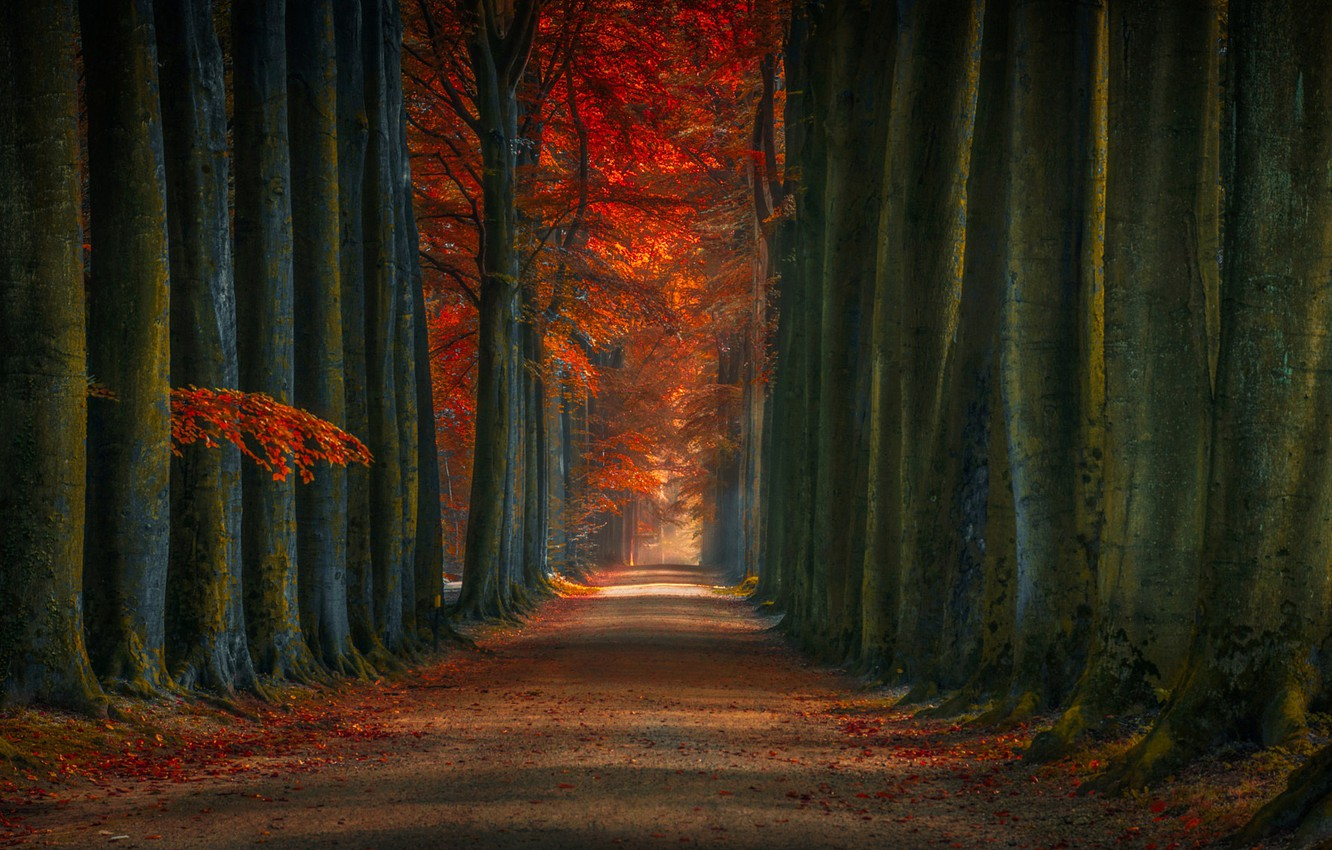 Photo wallpaper autumn, forest, leaves, trees, Park, track, alley