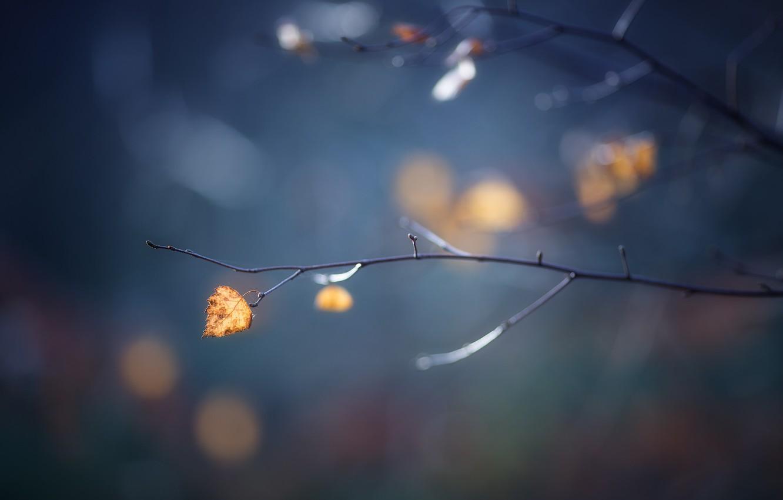 Photo wallpaper autumn, sheet, branch