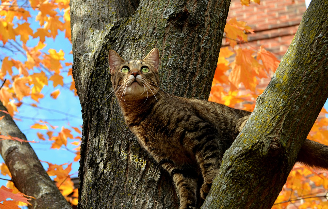 Wallpaper Tree, Cat, Autumn, Fall, Tree, Autumn, Cat images for desktop,  section кошки - download