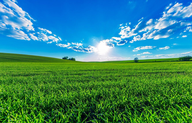 Photo wallpaper greens, field, summer, the sky, grass, the sun, clouds, trees