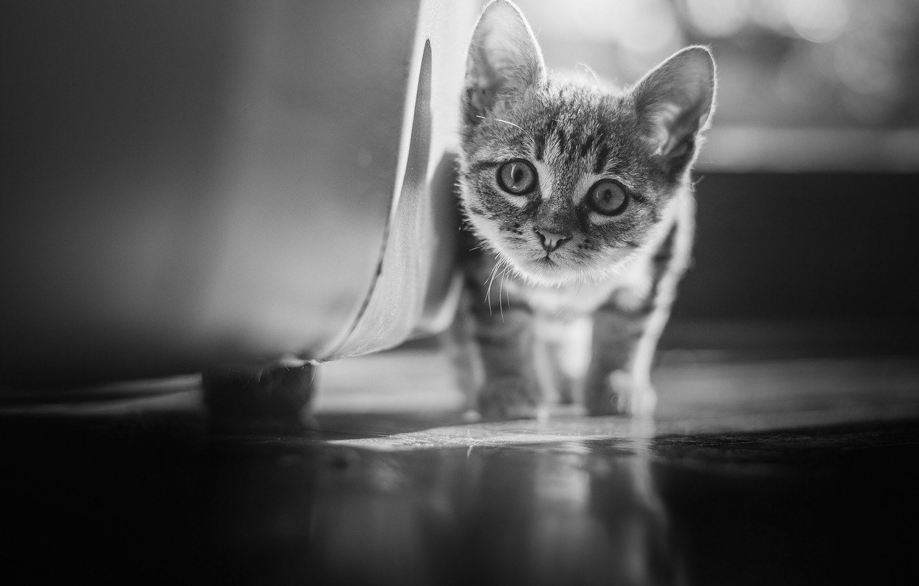Photo wallpaper look, baby, black and white, kitty, monochrome