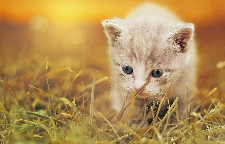 Photo wallpaper grass, baby, kitty, bokeh