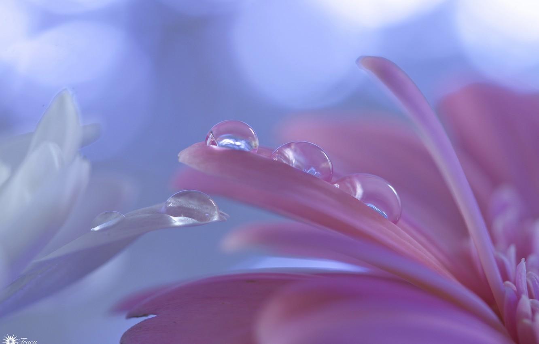 Photo wallpaper drops, flowers, petals