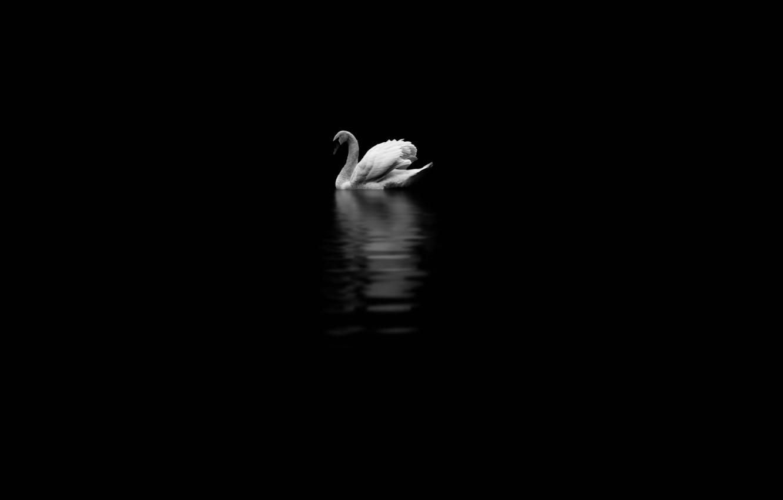 Photo wallpaper background, bird, Swan