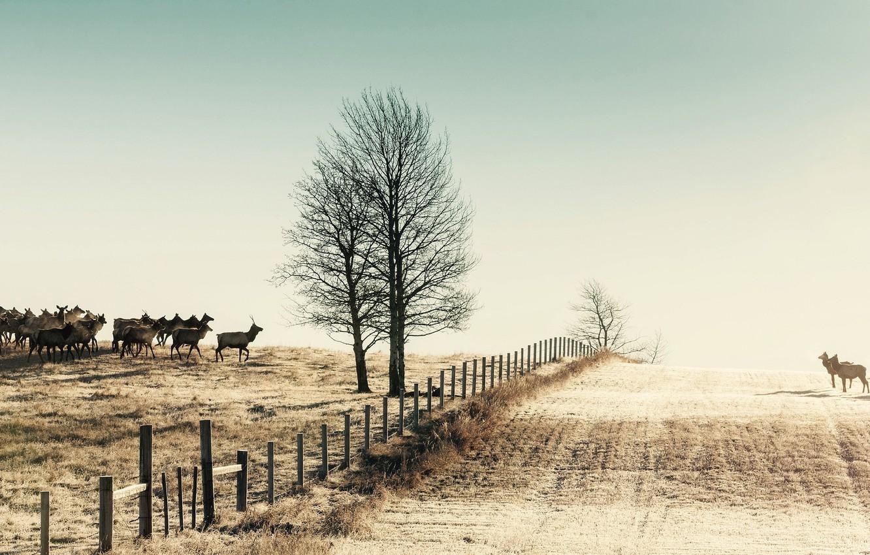 Photo wallpaper winter, field, nature, the fence, deer