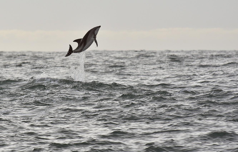 Photo wallpaper sea, jump, seascape, splash, wildlife, dolphin