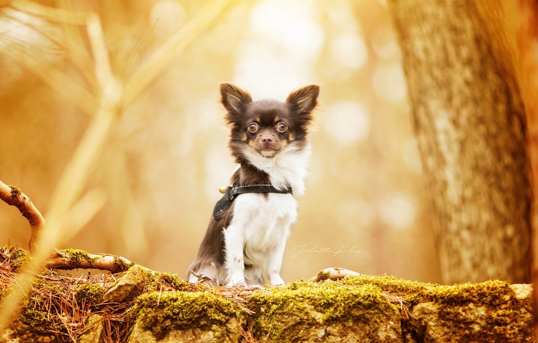 Photo wallpaper nature, background, dog