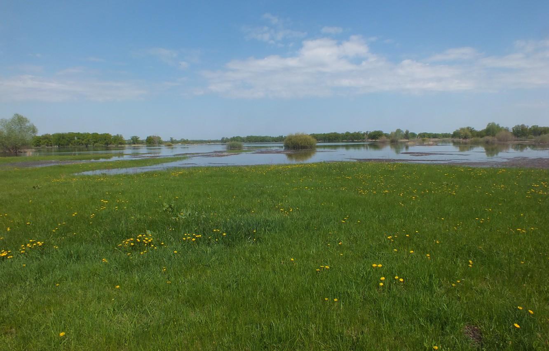 Photo wallpaper field, the sky, grass, trees, meadow, river, dandelions