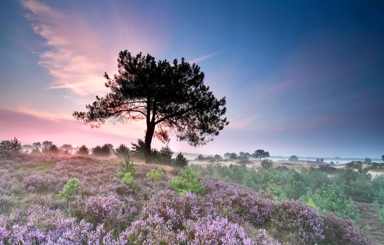 Photo wallpaper field, grass, flowers, fog, tree, morning, the bushes