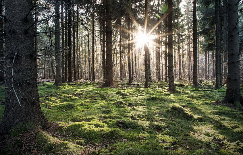 Photo wallpaper forest, light, nature