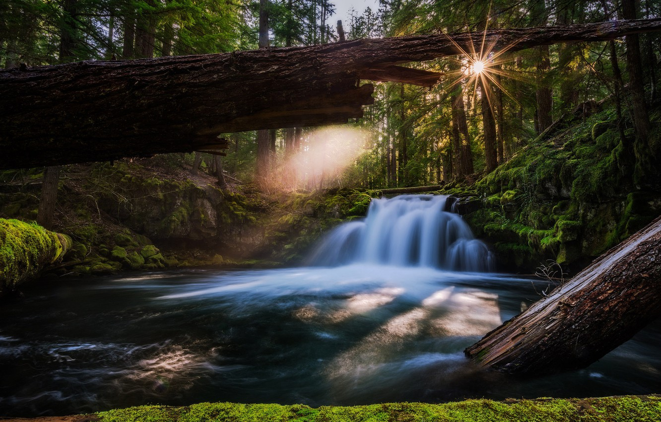 Photo wallpaper forest, river, waterfall, Oregon, Oregon, logs, Whitehorse Falls, Waterfall Whitehorse, river Umpqua, Umpqua River