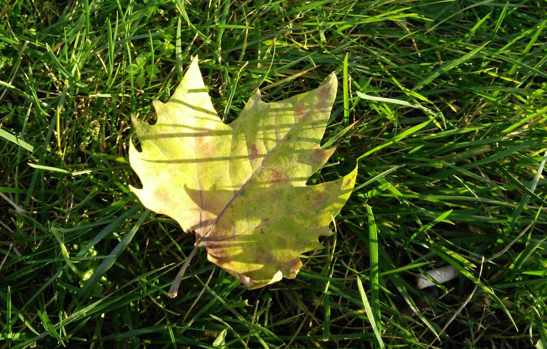 Photo wallpaper autumn, grass, macro, sheet, grass, autumn, macro, leav, fall