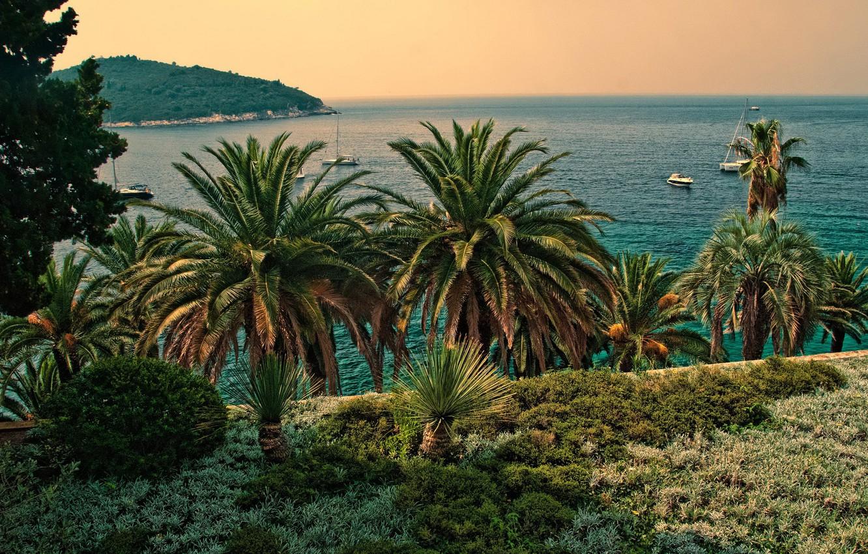 Photo wallpaper sea, the sky, the sun, palm trees, coast, yachts, horizon, Croatia, Dubrovnik