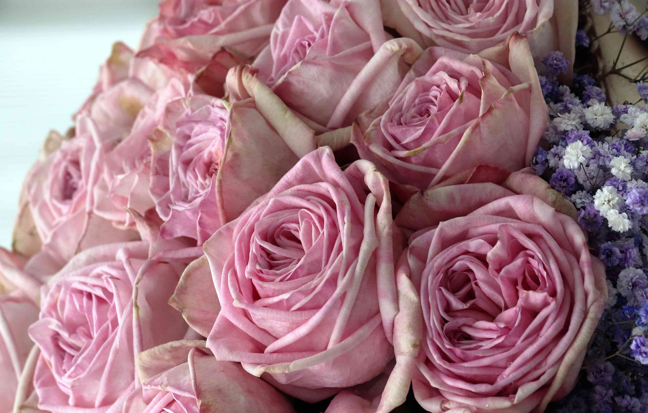 Photo wallpaper roses, bouquet, pink, buds
