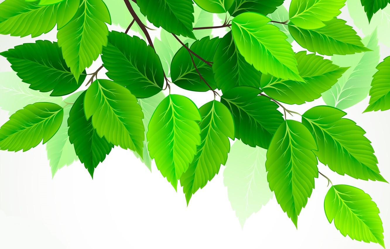 Photo wallpaper leaves, green, birch