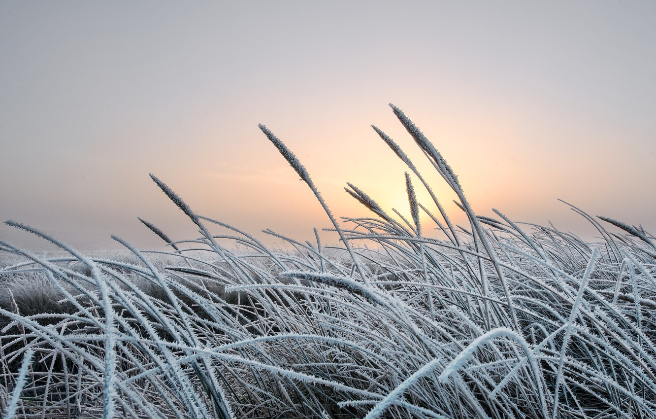 Photo wallpaper cold, winter, frost, grass, nature