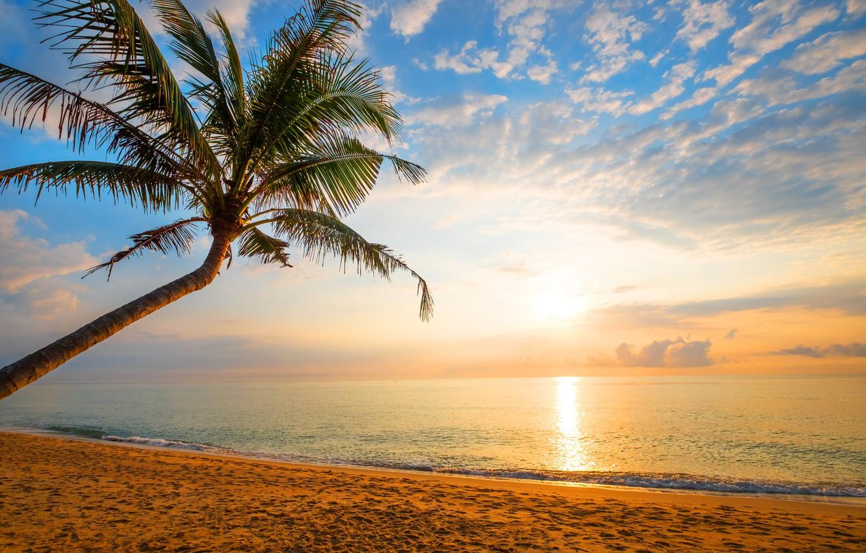 Photo wallpaper sand, sea, wave, beach, summer, sunset, palm trees, shore, summer, beach, sea, sunset, seascape, beautiful, …