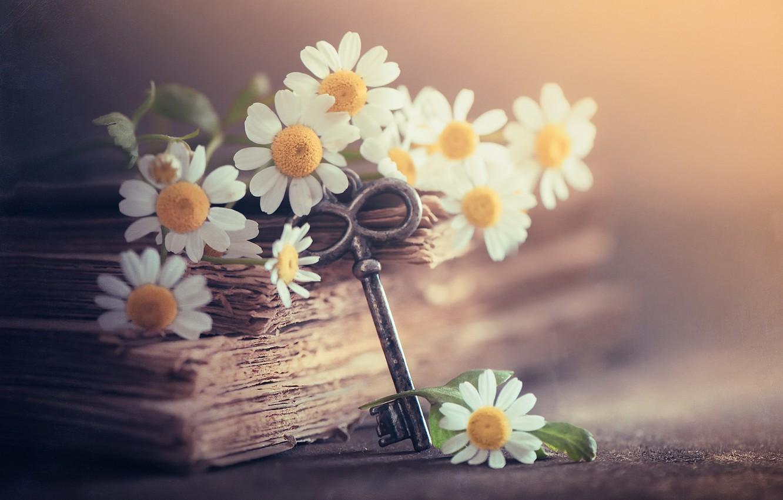 Photo wallpaper chamomile, key, book