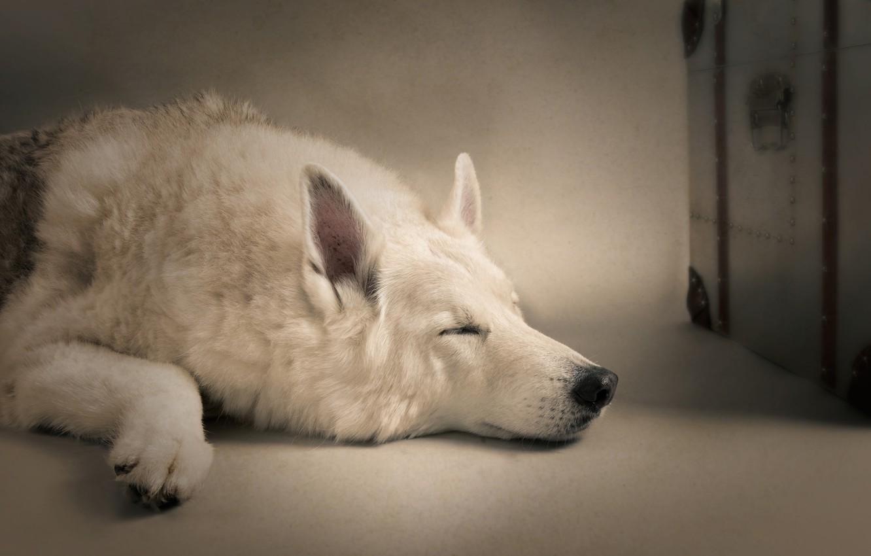 Photo wallpaper sleep, dog, sleeping dog