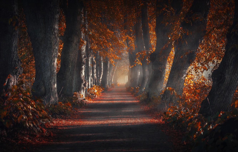 Photo wallpaper road, autumn, trees, nature