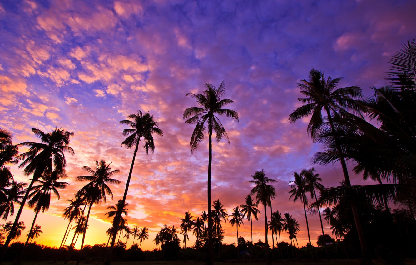 Photo wallpaper the sky, sunset, palm trees