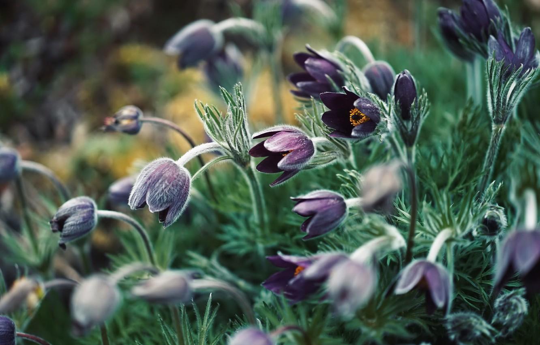 Photo wallpaper flowers, nature, background, sleep-grass, cross