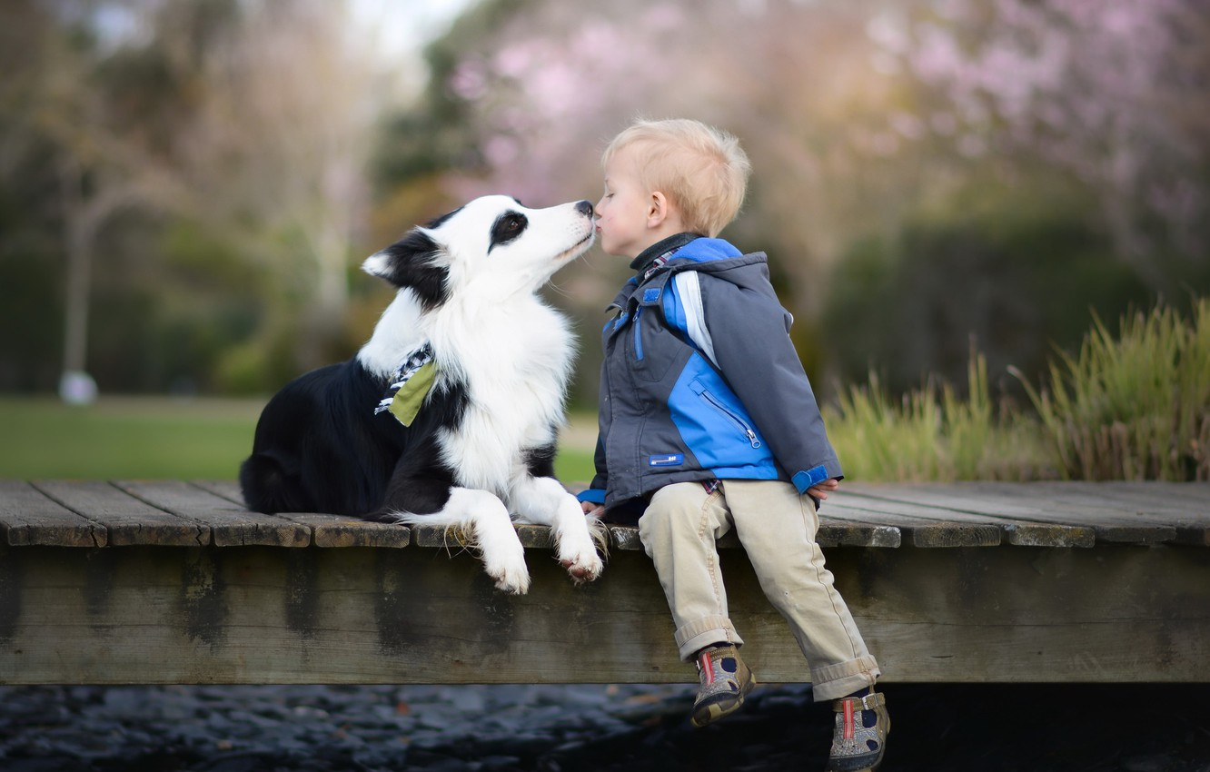 Photo wallpaper dog, boy, friends