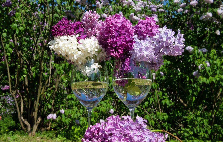 Photo wallpaper spring, glasses, lilac, lilac, stemware