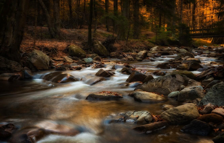 Photo wallpaper autumn, forest, river